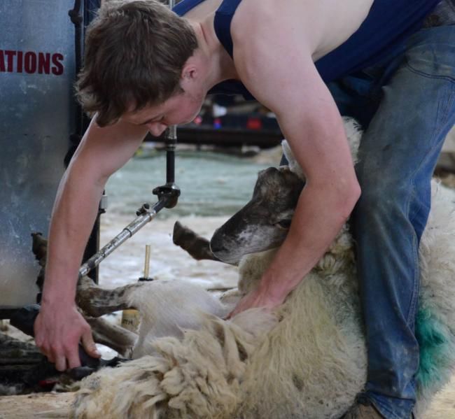 : Farming Connect subsidised training could help you or a member of your family get to grips with a valuable rural skill such as sheep shearing
