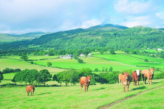 More money is being made available for red meat in Wales