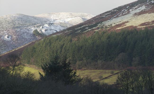 Wales' countryside could be transformed by a national forest