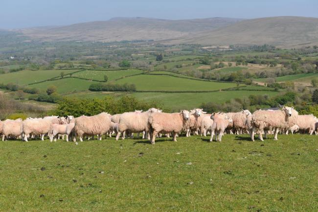 Key schemes which underpin Wales' rural economy, biodiversity and environmental priorities are to receive further support  PICTURE: Debbie James
