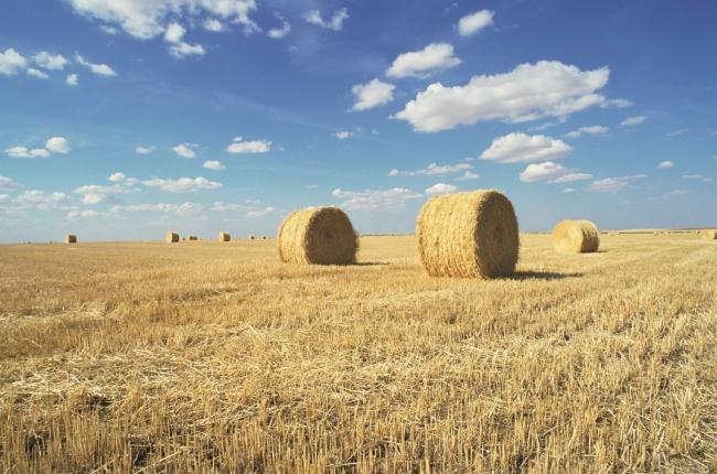 Farmers are enjoying a surge in popularity