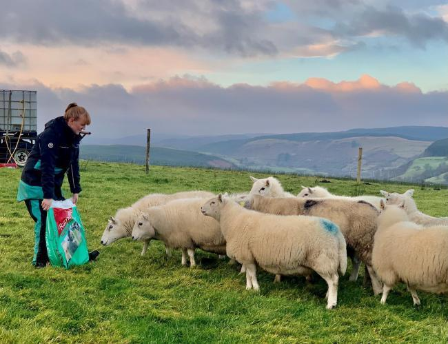 Siony Rudd said the prize would be a huge boost to her developing flock