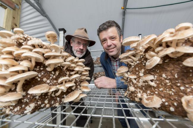 Cynan Jones (left) and Arwyn Groe of Madarch Cymru – The Mushroom Garden pictured before the Covid restrictions Picture: James Davies Photography