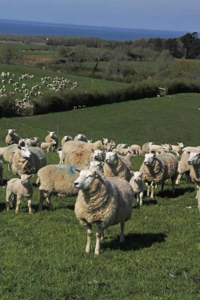 NSA Wesh Sheep won't return until 2023