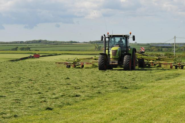 Moisture is desperately needed to boost yield in first cut silage crops  Picture: Debbie James