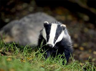 CULL REACTION: Farming unions welcome proposal