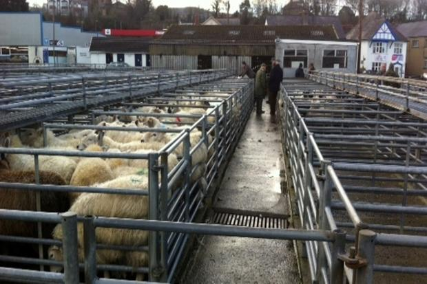 Newcastle Emlyn mart