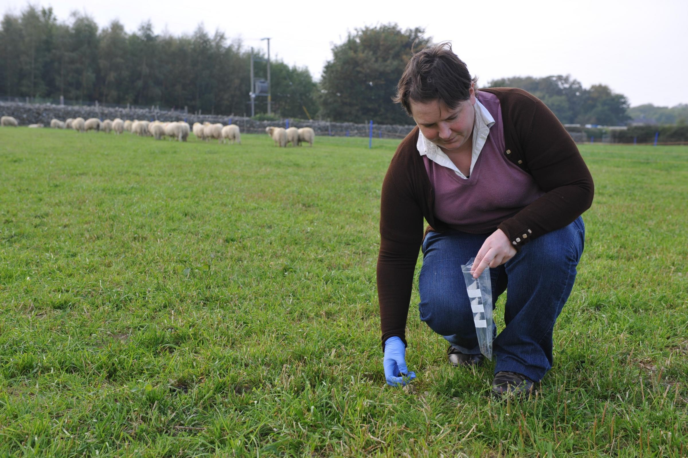 Test dung samples for the presence of fluke eggs PICTURE: Debbie James