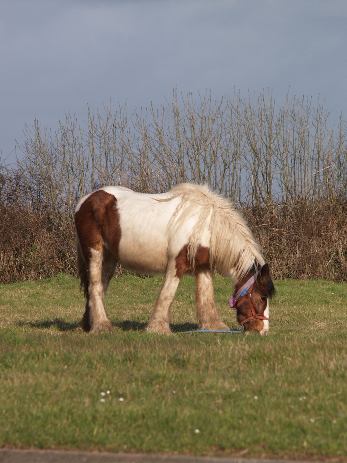 The number of horses reported due to fly-grazing has fallen sharply PICTURE: Debbie James