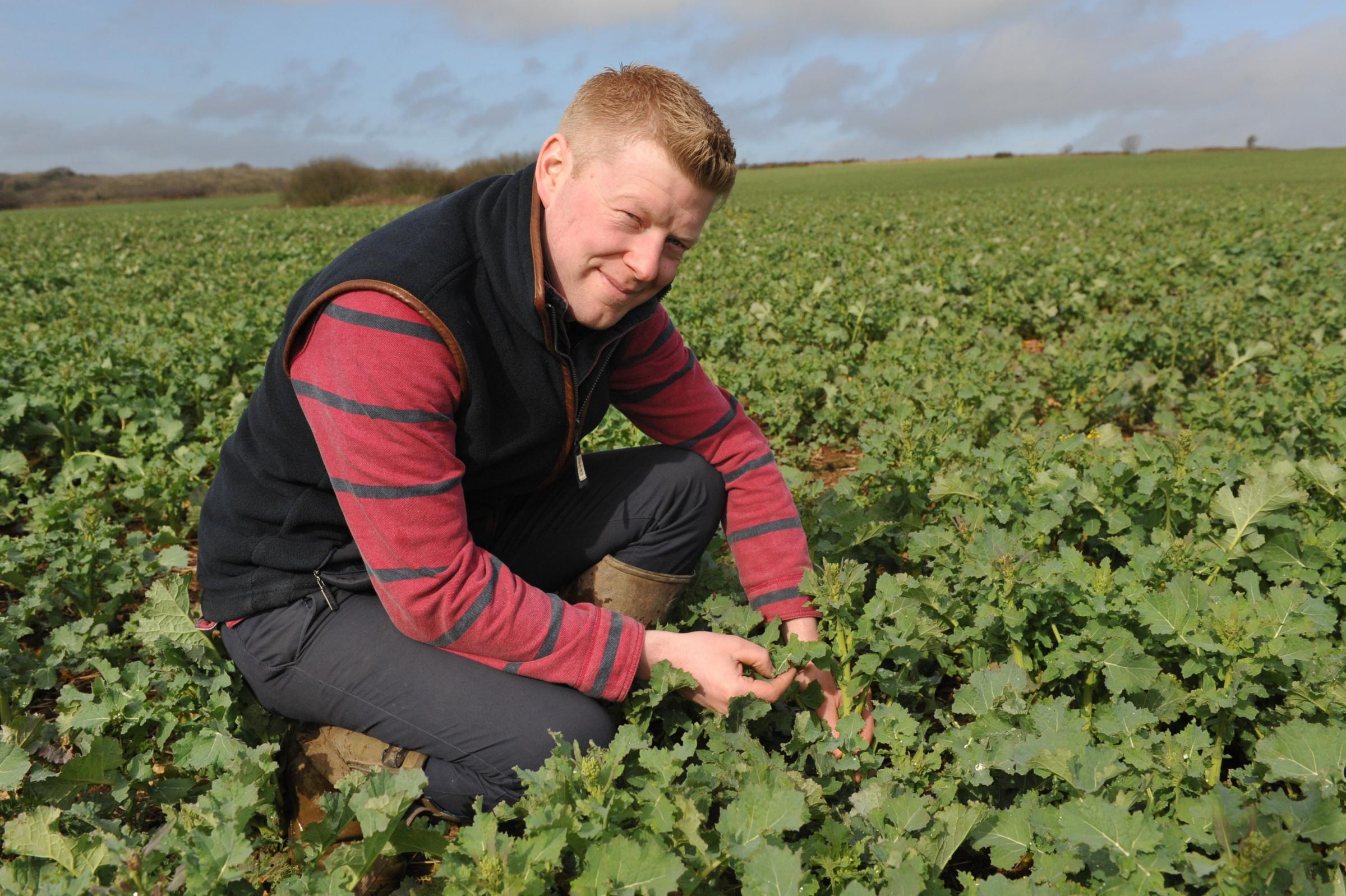Tom Rees in a field of oilseed rape