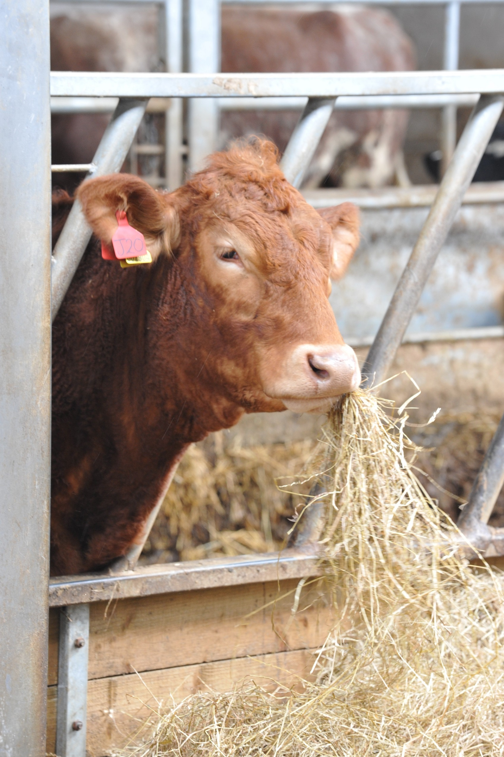 Turnout is weeks behind schedule on many Welsh farms PICTURE: Debbie James