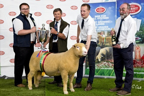 Champion male exhibit, best single shearling poll ram and joint highest price poll, sponsored by Waitrose – David Lewis's Pembroke Zupreme with Dylan Laws of Waitrose, president Francis Fooks, David Lewis and judge Andrew Kingdon
