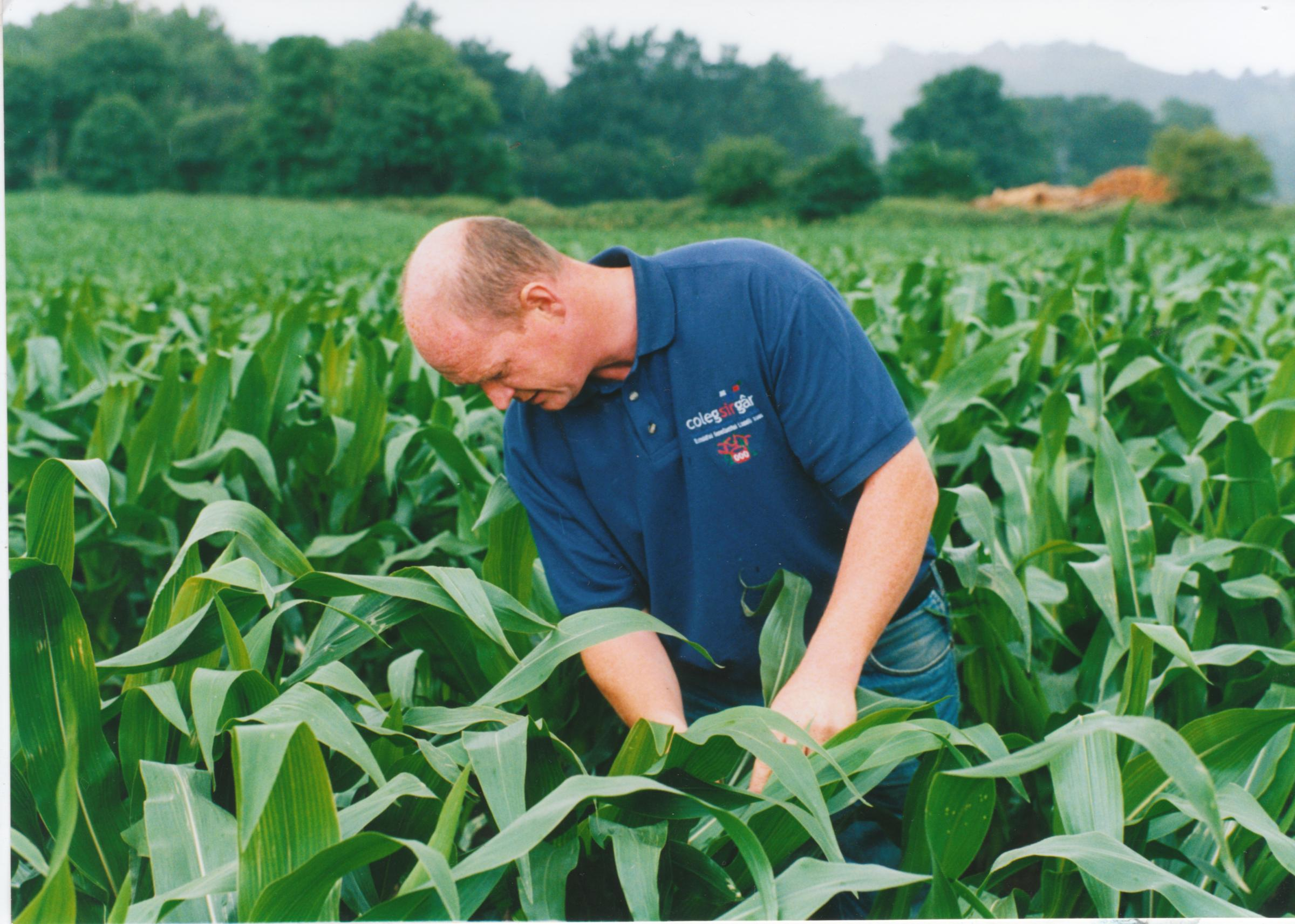 John Owen observes the effective value of farm slurry as ferilizer for a crop of forage maize