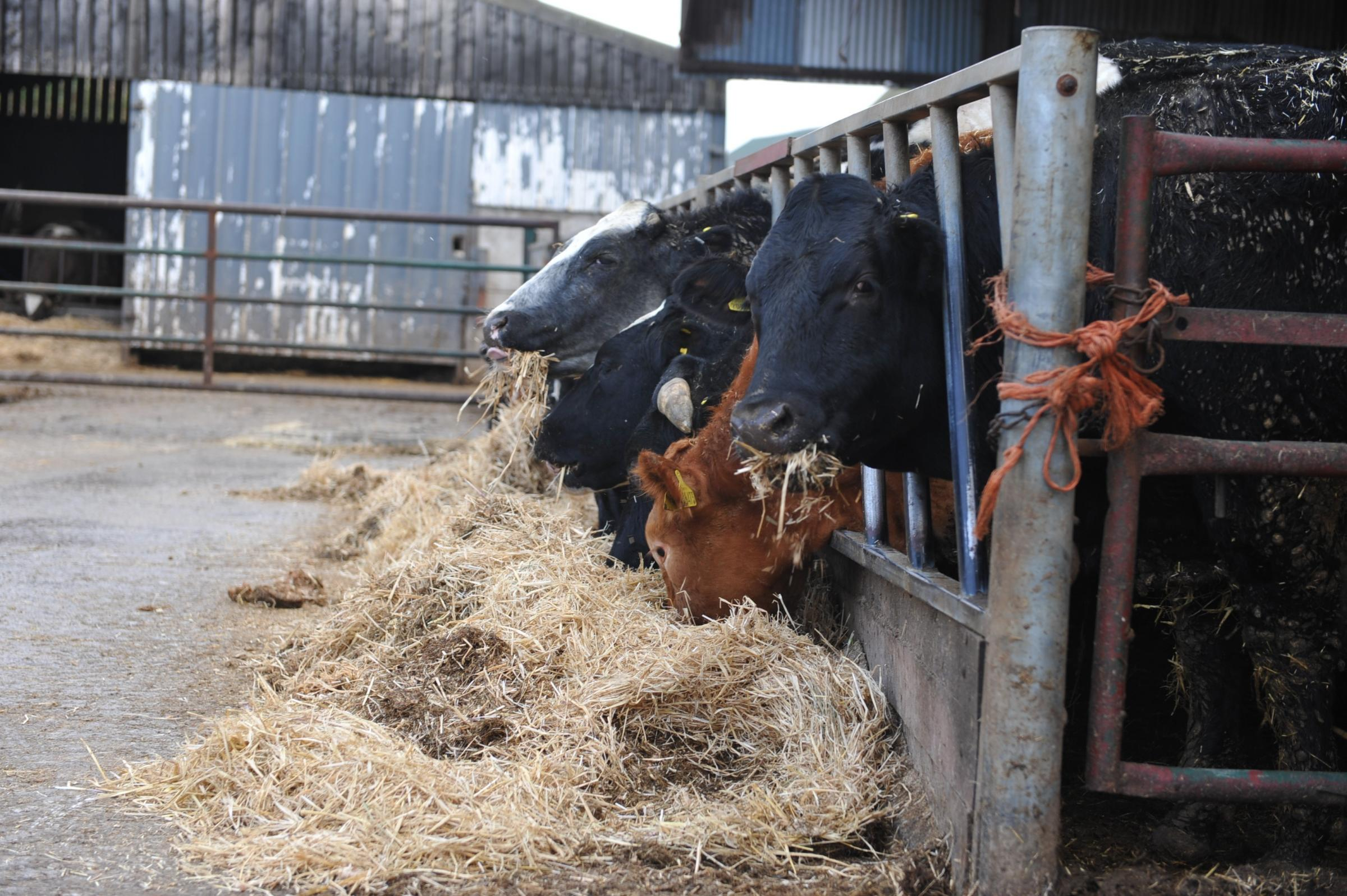 Record prices for straw will push livestock bedding and feed costs this winter PICTURE: Debbie James