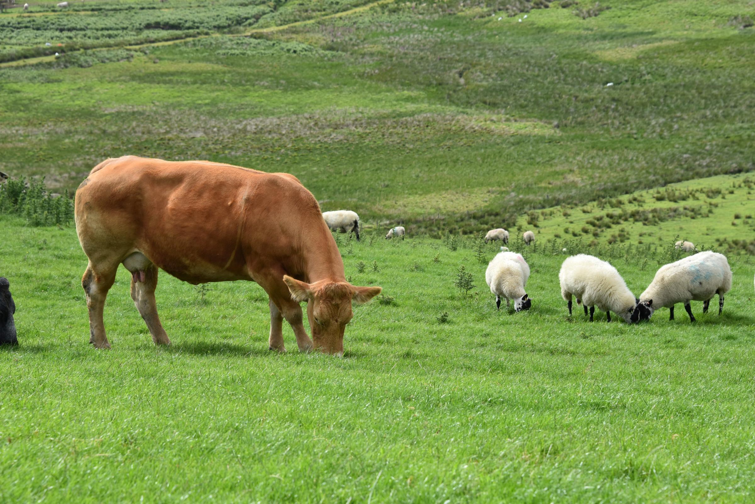 What is the optimum size for livestock?